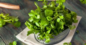 Watercress Wins the Battle Against Cancer